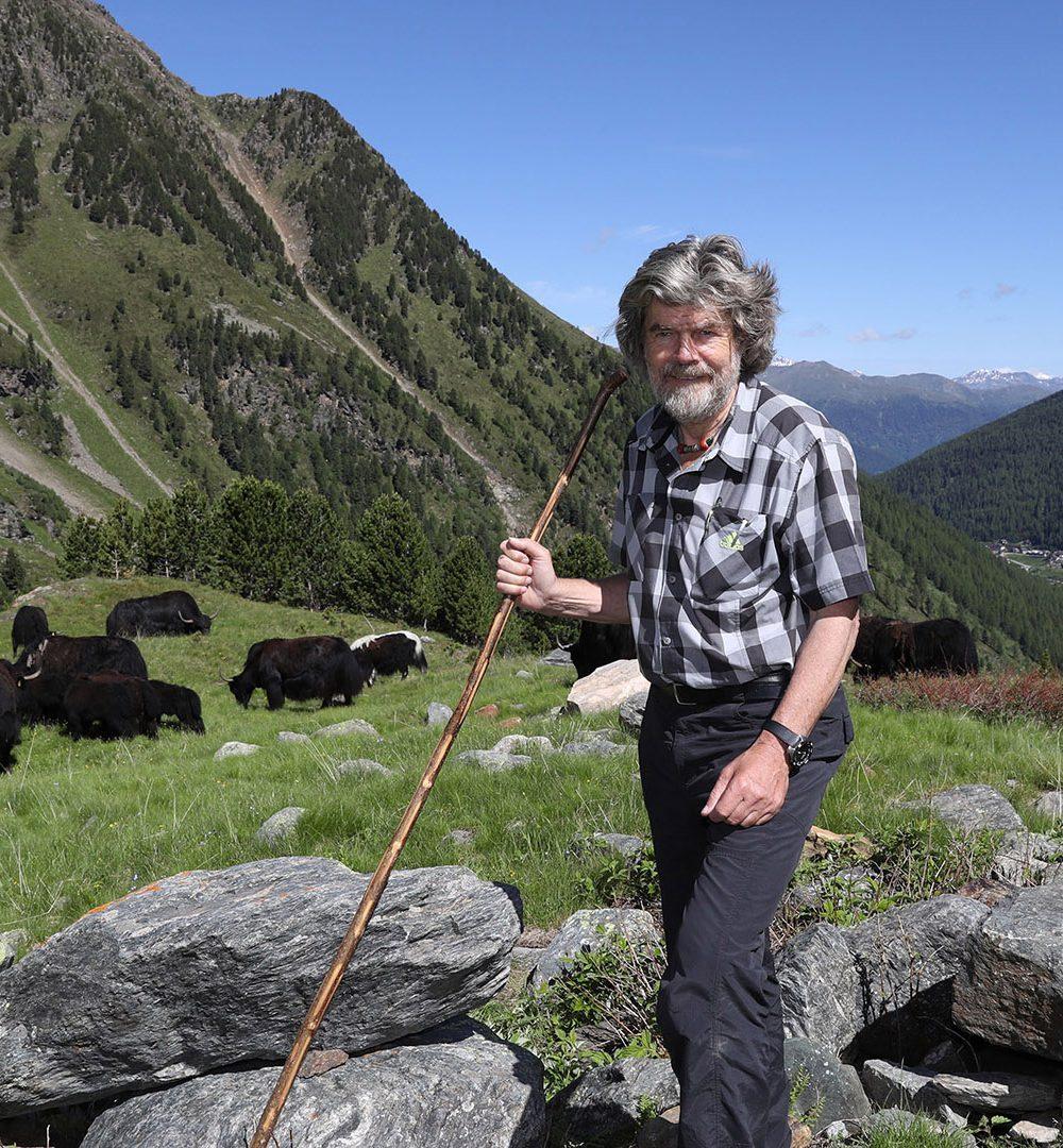 Reinhold Messner treibt die  Yaks von Sulden am Ortler auf den Berg Zum 31. Mal treibt Reinhold Messner seine Yaks vom Winterquartier in Sulden am Ortler (2000m Höhe) auf die Alm (3000m), wo sie den Sommer verbringen. Bei Wintereinbruch gehen sie dann alleine wieder vom Berg herunter. Reinhold Messner hat die Yaks vor über 30 Jahren während seiner vielen Reisen nach Tibet mitgebracht.  Copyright by Sammy Minkoff Langaeckerstrasse 12 82279 Eching am Ammersee Tel:+49-8243-99 78 58 mobil: +49- 171 426 49 72